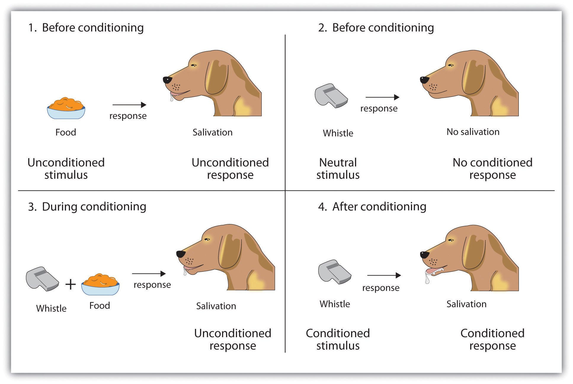 Classical Conditioning - Classical Conditioning